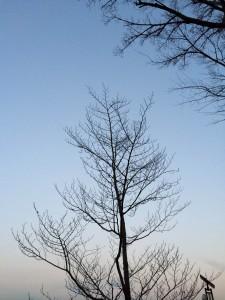 treeinwinter